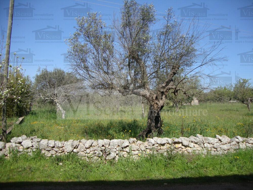 Terreno agricolo con trullo